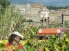 San Lorenzo vineyard, Pitigliano