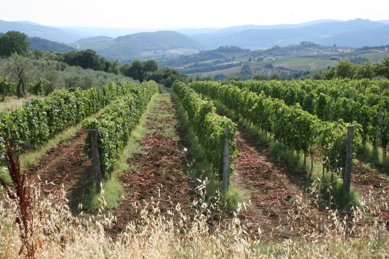 Rufina vineyards and countryside