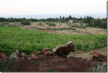 Triassic vineyard