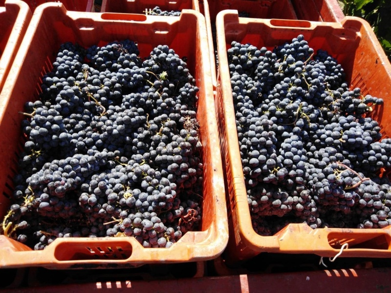 Grapes in baskets