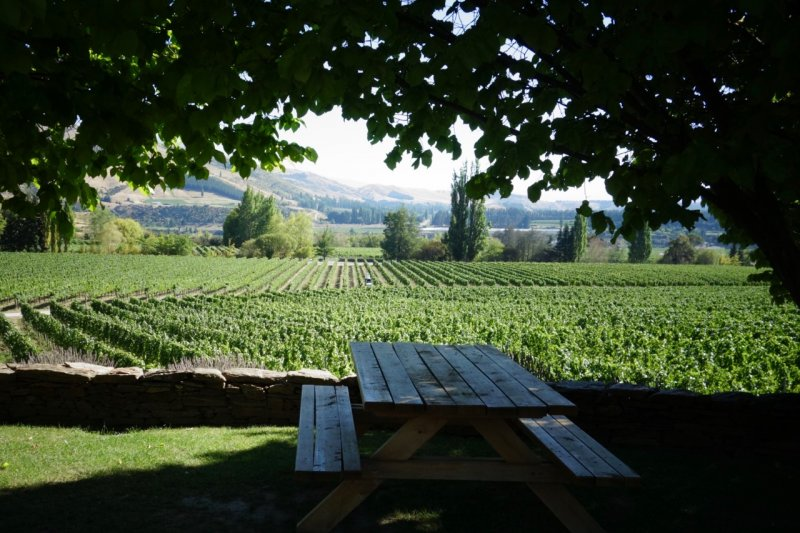View over vineyards