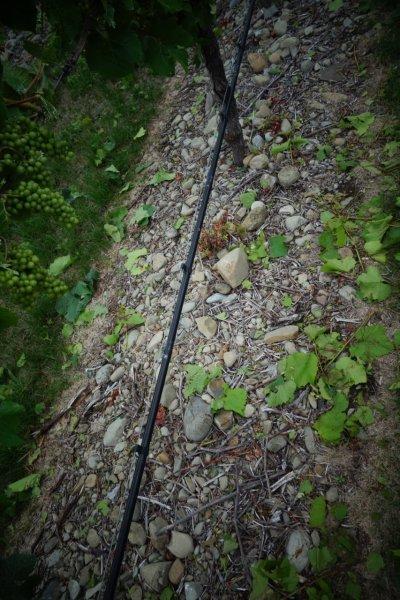 stony soils in Awatere Valley