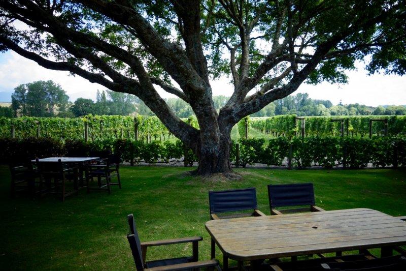 Neudorf tree