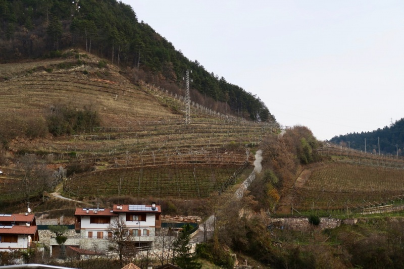 mountain viticulture Trentino