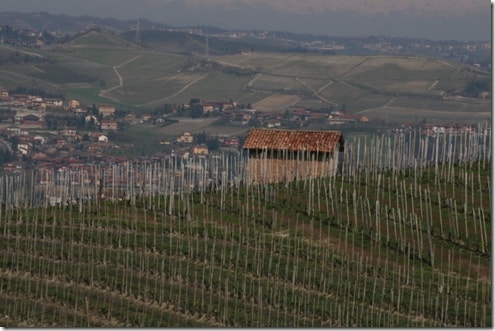 Barbaresco vineyard