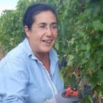 Tuscan harvest 2019