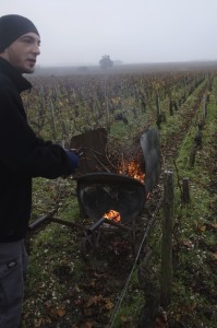 Pruning at Pichon
