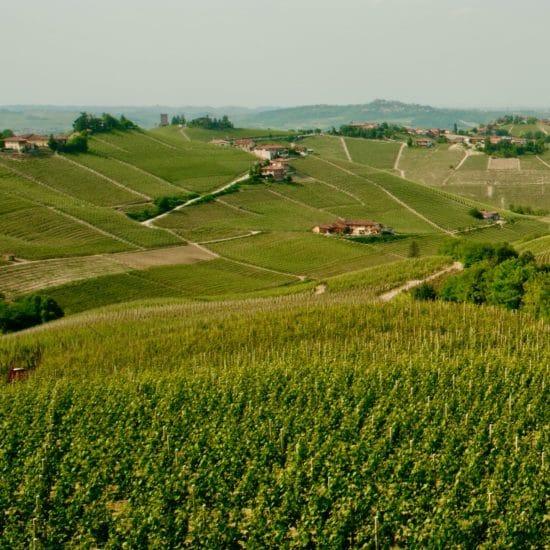 Sottimano vineyard
