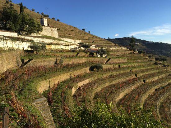 Douro table wines