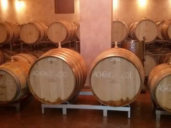 White wine in barrels at Bolgheri, Tuscany