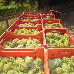 Campo alla Sughera Chardonnay