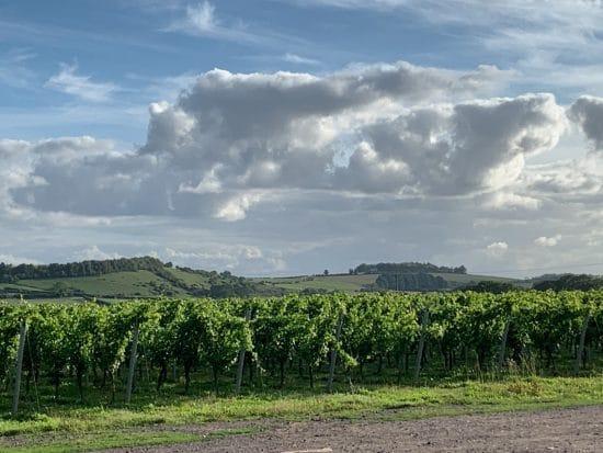 Hazeldown vineyard, Stockbridge
