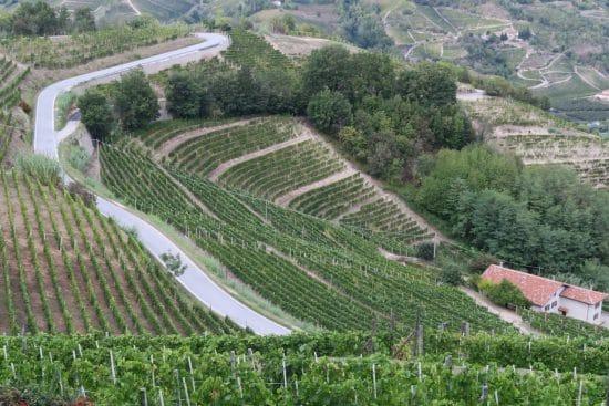 Suri - steep sloped vineyard - in Asti DOCG